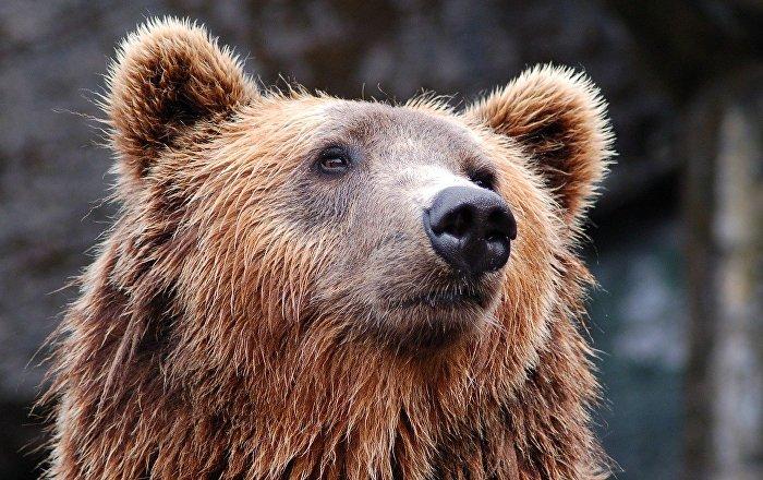 Αρκούδα.