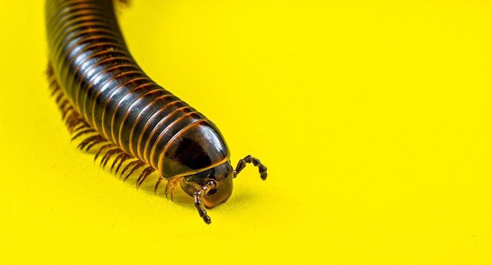 Σκουλήκι