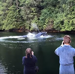 Φάλαινα σε καναδικό τουριστικό θέρετρο