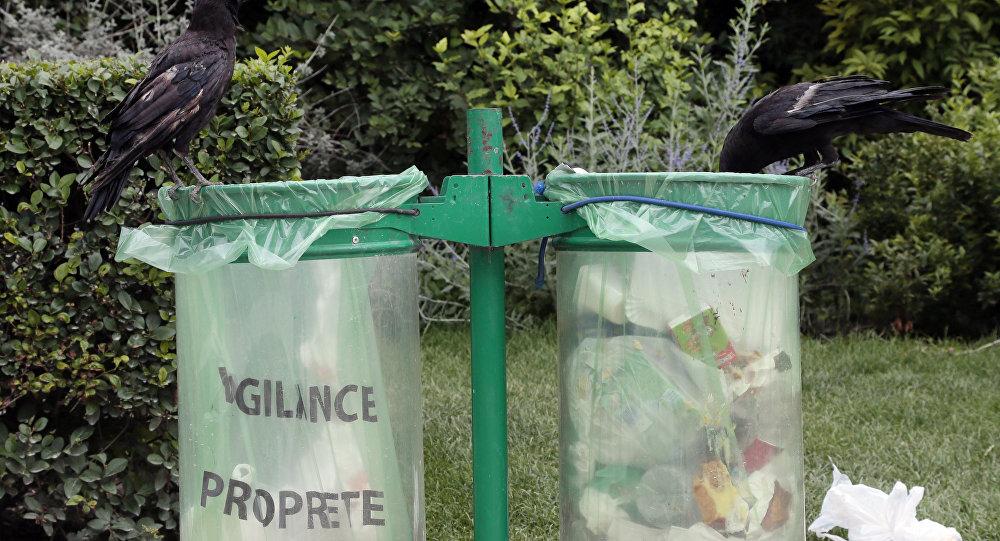 Κοράκια σε σκουπιδοτενεκέ