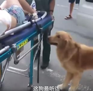 Σκυλί αρνείται να φύγει από το πλευρό της ιδιοκτήτριάς του