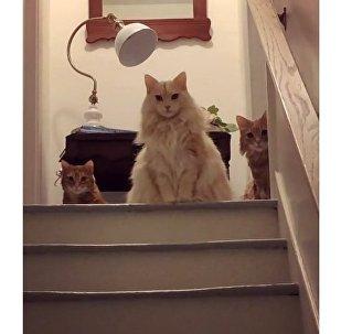Οι απίθανες γάτες Φράνκι, Λίλι και Φρεντ