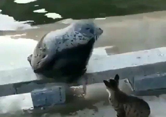 Αντίδραση φώκιας σε χτύπημα γάτας