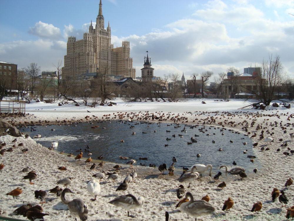 Άποψη του κτιρίου Κόκκινη Πύλη από τον ζωολογικό κήπο της Μόσχας