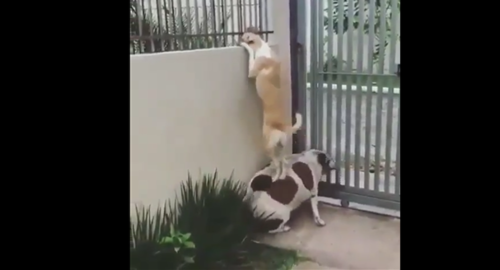 Σκυλί βοηθά τον φίλο του