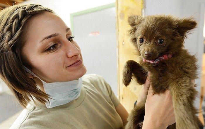 Κουτάβι στον κτηνίατρο